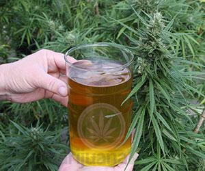 L'huile de cannabis bio