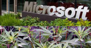 Microsoft investit dans le cannabis