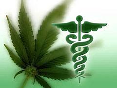 Le cannabis biologique une plante médicinale utilisée depuis des millénaires pour ces propriétés thérapeutiques
