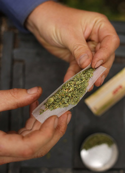 Cigarette de cannabis marijuana biologique